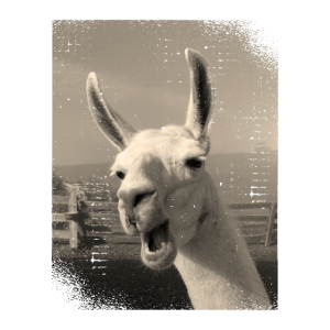 Funny vintage Love llama alpaca photo