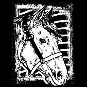 Reiten - Reiter - Reitschule - Pferdekopf