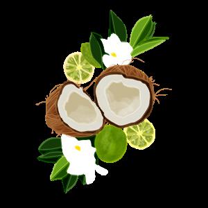 Tropische Kokosnüsse