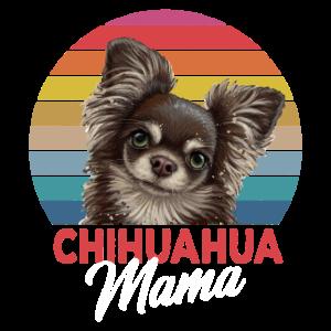 Chihuahua Mama Frauchen süße Hunde