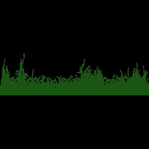 Gras Boden Wiese Graswiese