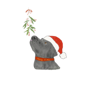 Hund mit Weihnachtsmütze und Mistelzweig