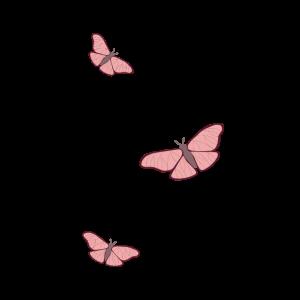 butterfly Schmetterling Schmetterlinge Rosa