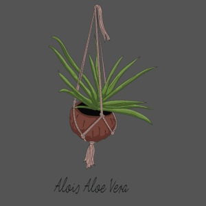 Alois Aloe Vera Pflanze in Kokosnussschale
