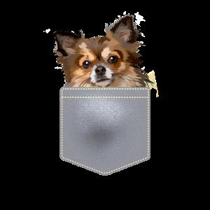 Chihuahua in der Brusttasche