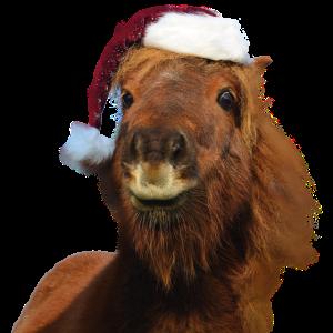 Weihnachtspferd XMAS Pferd Pferdeweihnacht