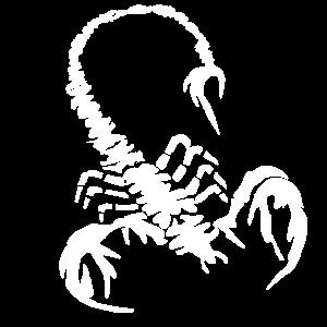 weißer skorpion, tiere, arachnida