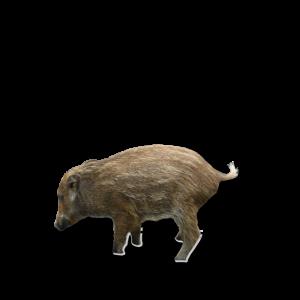 wildschwein jäger eber child sau