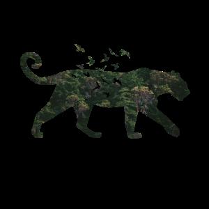 Amur Leopard Java Sinai Umweltschutz Naturschutz
