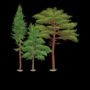 Wald Bäume Natur