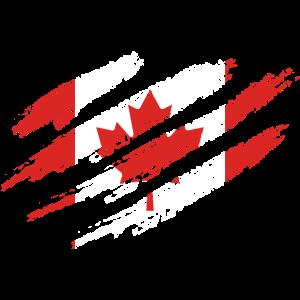 Kanada Flagge Kratzer Ahorn Ahornblatt Maple Leaf