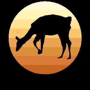 Alpaka Lama Sonne Sonnenuntergang
