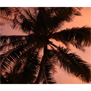 Seychelles Palmen Sonnenuntergang