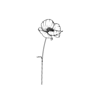 Blume Line Art Mohnblume Line work