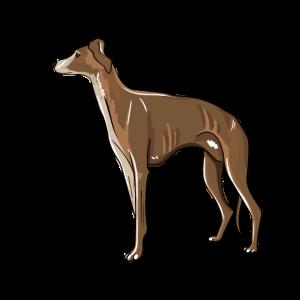 Windhund Illustration