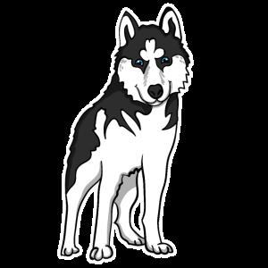 Husky Illustration