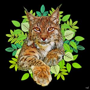 Luchs Katze Freiheit wild cat katze