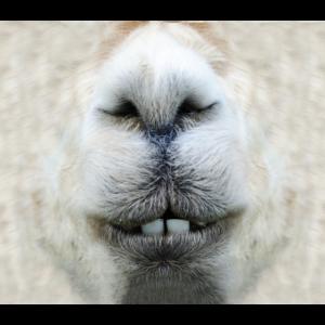 Lustige Maske Lama
