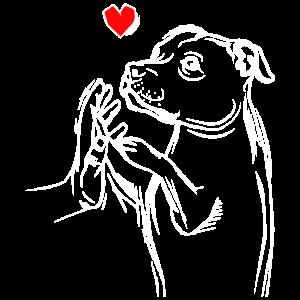 Staffordshire Bullterrier Liebe Frauchen Hunde