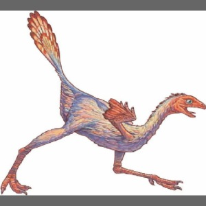 caudipteryx2
