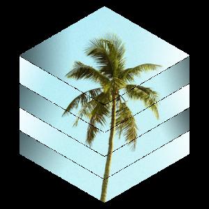 palme würfel design