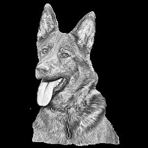 Zeichnung Schäferhund Deutscher Schäferhund Hunde