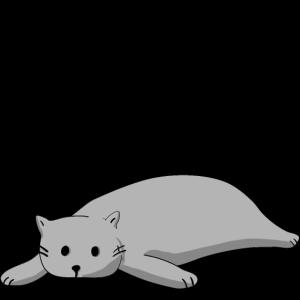 Katzen schlaf