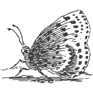 butterfly illustration vintage schmetterling wunsc