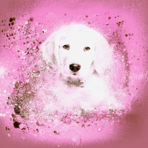 Illustration,welpe, Labrador, Golden Retriever