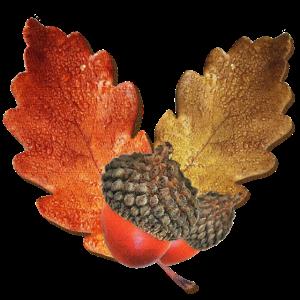 Eichenblätter und Eicheln, Wald, Herbst