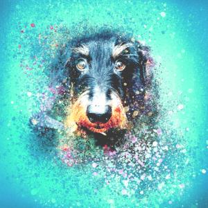 Dackel,Hund,illustration, blau, Graffiti