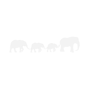 Elefanten Familie Ausflug