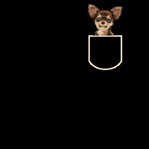 Chihuahua In Der Brusttasche Hunde Geschenkidee