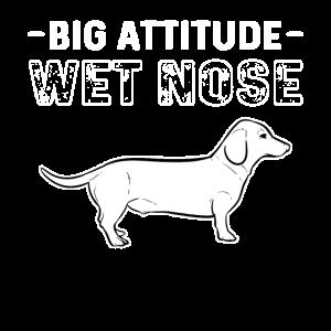 Big Attitute Wet Nose Dachshund Hunde Dog