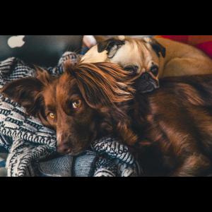 Hunde kuscheln mit süssen Blicken