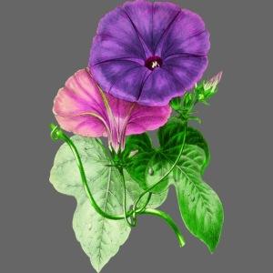 vintage mallow flower
