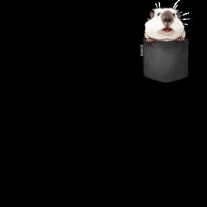 Meerschweinchen in der Brust Tasche