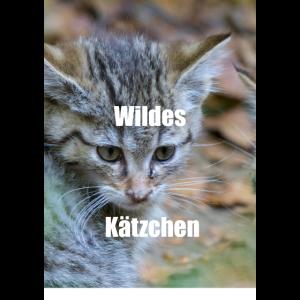wildes kaetzchen