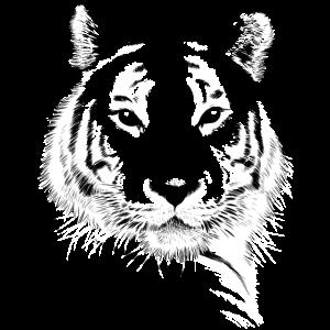 Tigergesichtsskizze