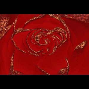 Red Copper Rose Macro Photo