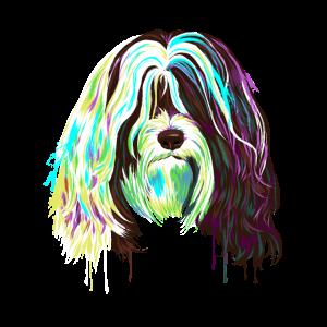 Splash Tibet Terrier Hund