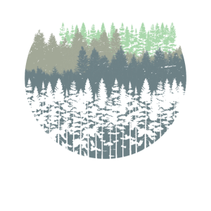 Natur Wald Bäume
