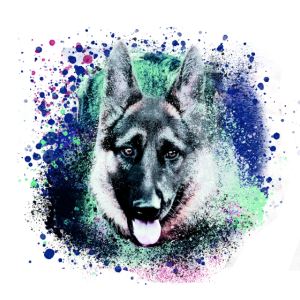 schäferhund,Malerei,illustration,blau, hund