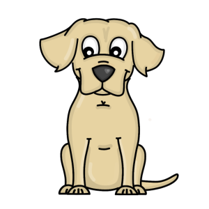 Labrador - Golden