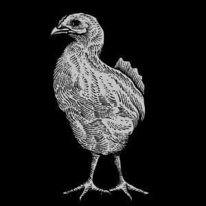 junges Huhn junger Hahn Küken Hühnerfamilie