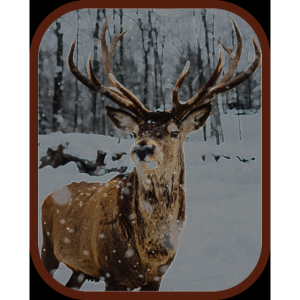 ROTHIRSCH im Winterwald