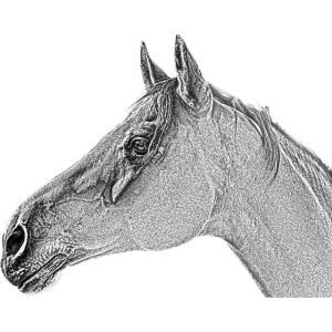 Pferdekopf Pferde Pferd Reitverein