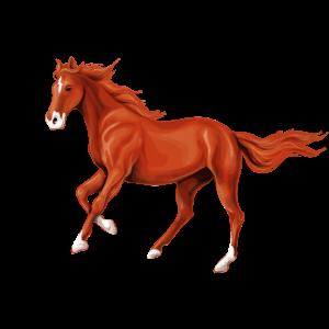 Braunes Pferd braun weiß Pferdeliebhaber Geschenk