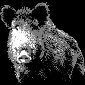 Wildschwein - Wildsau - Schwarzwild - Jagd - Jäger