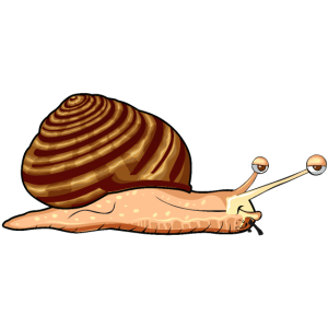 Schnecke Zeichnung Müdigkeit Muschel